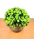 #4: Raajaoutlets Artificial Tables Decoration Plants | Home | Office | Indoor Showpices
