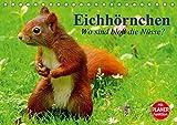 Eichhörnchen. Wo sind bloß die Nüsse? (Tischkalender 2020 DIN A5 quer): Die flinken Kletterer und Nüsseknacker unserer Wälder und Parkanlagen (Geburtstagskalender, 14 Seiten ) (CALVENDO Tiere)