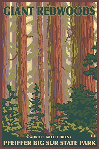 Pfeiffer Big Sur State Park (Pfeiffer Big Sur State Park, Kalifornien - Giant Redwoods, Papier, multi, 12 x 18 Art Print)