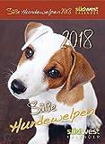 Süße Hundewelpen 2018 ABK