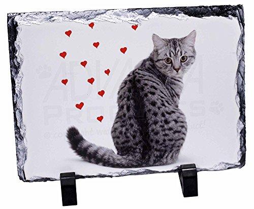 Silver Tabby-Katze mit roten Herzen Rock Photo, schiefer -