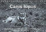 Canis lupus (Tischkalender 2020 DIN A5 quer): Impressionen in schwarz-weiss aus dem Leben der Wölfe (Monatskalender, 14 Seiten ) (CALVENDO Tiere)