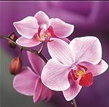 yeesam Art neuen 5D Diamant Painting Kit–PURPLE BUTTERFLY Orchidee–DIY Kristall Diamant Strass Gemälde eingefügt Malen nach Zahlen Kits Kreuzstich Stickerei