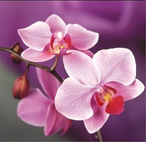 YEESAM Art nouveau 5d Diamant Peinture kit–Violet Papillon Orchidée–DIY Cristaux Diamant De Strass Peinture Collez-le Peinture par numéro Kits point de croix à broder