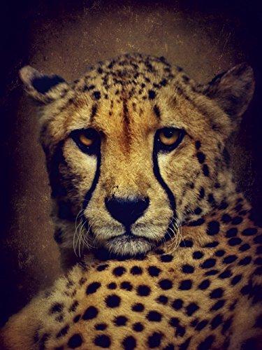 Artland Qualitätsbilder I Bild auf Leinwand Leinwandbilder Wandbilder 30 x 40 cm Tiere Wildtiere Raubkatze Malerei Braun A3MA Gepard (Gepard-druck-wand-bilder)