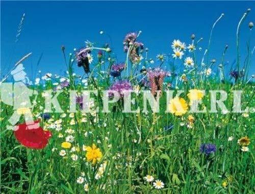 Reine Wildblumen und Kräutermischung