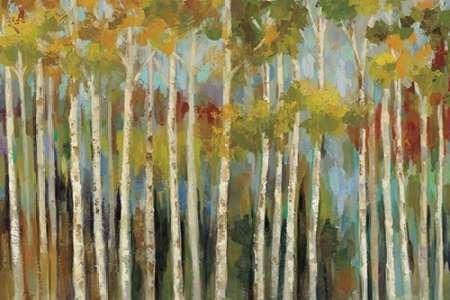 Young Forest III Von Vassileva, Silvia Kunstdruck auf Leinwand - Klein (20 x 13 cms ) (Kleine Jungs-wand-dekor)