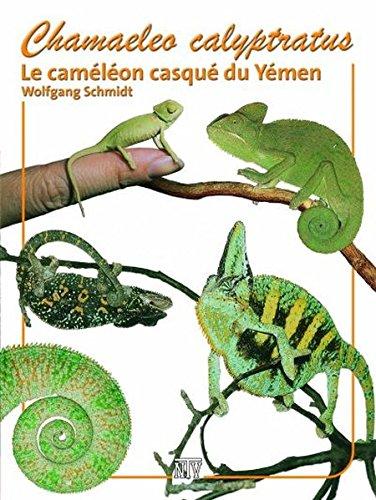 Chamaeleo calyptratus: Le camaéléon casqué du Yémen