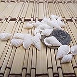 WINOMO Conchiglie di Mare Conchiglie Decorative Piccole Bianca Decorazioni Acquario 100 Pezzi