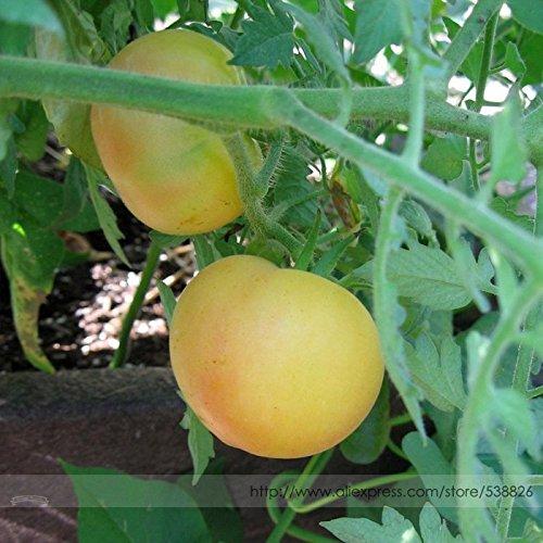 2018Hot Sale wapsipinicon Pfirsich 'Organic Heirloom Tomaten Samen, Profi-Pack, 100Samen/Pack, außergewöhnliche creme gelb Gourmet Tomate