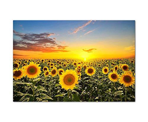 Panoramabild 120x80 cm - Sonnenblumen-Feld Helianthus beim Sonnenuntergang unter blauem Himmel! Tolle Farben! - Bild auf Keilrahmen modern stilvoll - Bilder und Dekoration