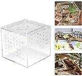 Boîte de Reproduction de Reptiles acryliques Boîte de visionnement des Insectes pour Les grillons araignées et Les escargots Hermit Crabes Tarantules