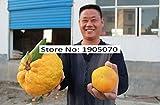 Sachet de 200graines de fruits à planter, différentes variétés, fruits géants et de différentes couleurs