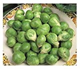 VEGETABLE BRUSSEL SPROUT EVESHAM SPECIAL 2400 FINEST SEEDS