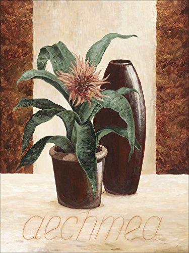 Artland Qualitätsbilder I Alu Dibond Bilder Alu Art 90 x 120 cm Botanik Pflanzen Topfpflanze Malerei Creme A1XM Aechmea Lanzenrosette