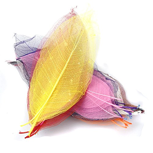 50pcs Magnolia Naturales Esqueleto De Hoja Hojas Del Libro De Recuerdos Tarjeta - Color Mezclado