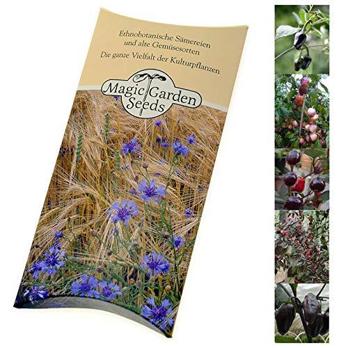 'Chilis lila-schwarz' Samen-Geschenkset mit 5 aromatischen & dekorativen dunklen Chilisorten