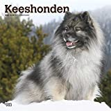 Keeshonden - Wolfsspitze 2020 - 16-Monatskalender mit freier DogDays-App: Original BrownTrout-Kalender [Mehrsprachig] [Kalender] (Wall-Kalender)