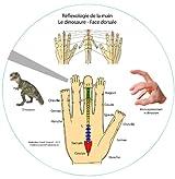 Réflexologie de la main