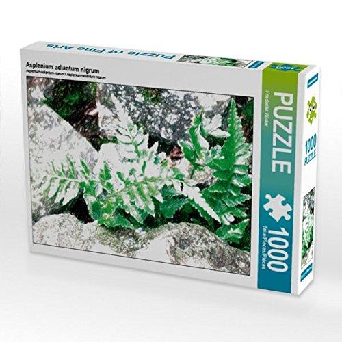 CALVENDO Puzzle Asplenium Adiantum nigrum 1000 Teile Lege-Größe 64 x 48 cm Foto-Puzzle Bild von Friederike Küster