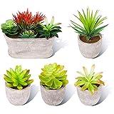 Binen Künstliche Sukkulenten Pflanzen, Mini Topf Assorted Künstliche Topf Faux Sukkulenten Pflanzen mit Töpfen für Hausgarten Decor