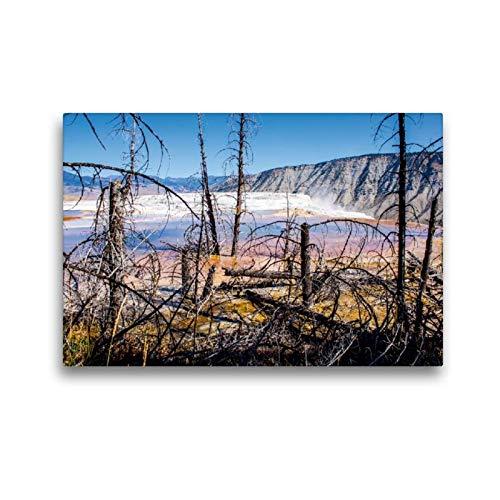 Calvendo Premium Textil-Leinwand 45 cm x 30 cm quer, Toter Wald Yellowstone NP, USA | Wandbild, Bild auf Keilrahmen, Fertigbild auf echter Leinwand, Leinwanddruck Natur Natur -