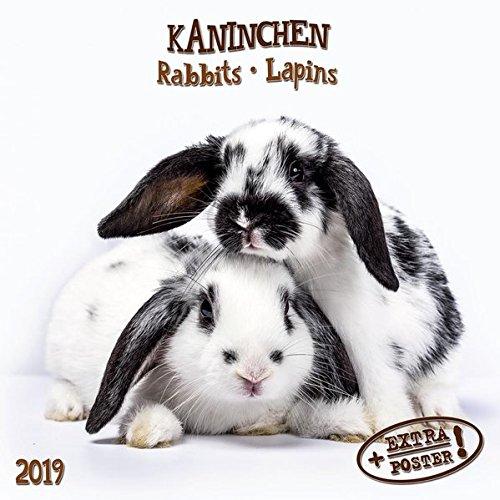 Kaninchen - Rabbits - Lapins 2019 Artwork