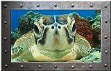 Sticker Trompe l'oeil Hublot Rectangle Cadre Métal Tortue vue sous marine- HUP048 (20x13cm)
