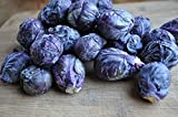 Seedscare Brussels Sprouts Purple Exotic Seeds - Pack of 50 seeds