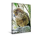 Calvendo Premium Textil-Leinwand 30 cm x 45 cm hoch, Ein Frecher KEA Sitzt auf Einem Felsen | Wandbild, Bild auf Keilrahmen, Fertigbild auf Echter Leinwand. notabilis, Neuseeland Tiere Tiere