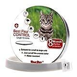 BingPet Collier antipuces pour chat puces et tiques–Meilleur Traitement de contrôle pour chaton–8mois de protection efficace