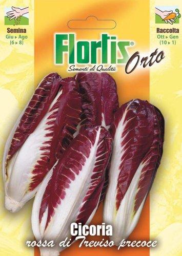 Salatsamen - Roter Blattzichorie Di Treviso von Flortis