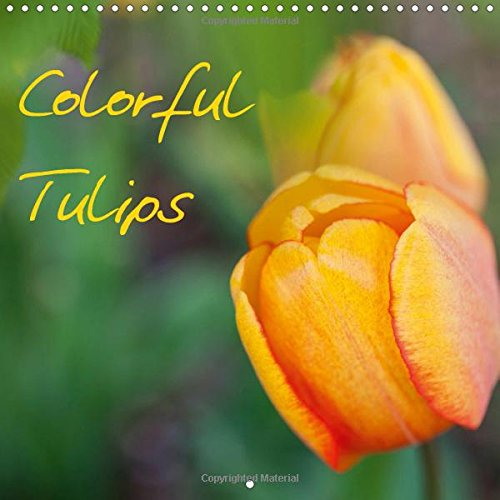 Colorful Tulips (Wall Calendar 2017 300 × 300 mm Square): Tulips - The magic of spring blossoms. (Monthly calendar, 14 pages ) (Calvendo Nature) Tulip Magic