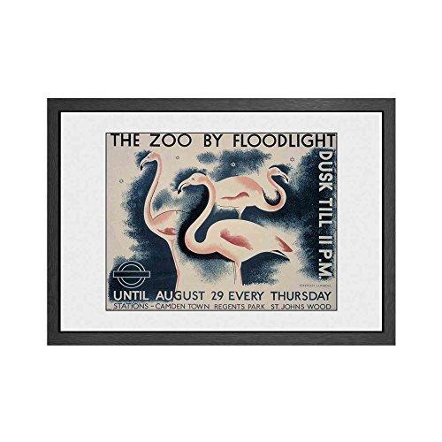 GB Eye Transport for London, The Zoo von Flutlicht Print, Holz, Mehrfarbig, 50x 3,5x 70cm -