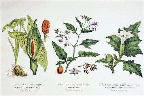 Giftpflanzen und Garten;