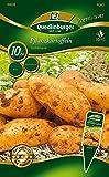 Quedlinburger 84008 Kartoffel Goldmarie 10 Stück (Pflanzkartoffeln)