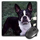 3dRose LLC 8 x 8 x 0.25 Inches Mouse Pad, Boston Terrier Duke (mp_3111_1)