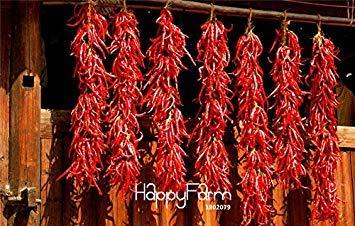 Épices bon marché 2000pcs Red Hot de haute qualité et épicé Chili Pepper Graines Plantes jusqu'à 50cm 20 long