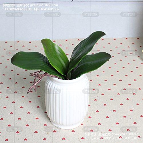 HUAYIFANG Emulation Emulation Verlässt Die Motte Motte Orchidee Orchidee Blumen Emulation Emulation Blume Grüne Blattpflanzen.