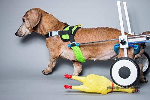 Silla de rueda ajustable para perro (XS-LW), especialmente para corgi, salchicha, altura de cadera: 19,5-35,6 cm, ancho: 20,32 cm - 27,94 cm, peso: 22,86 – 67,94 kg