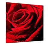 Kunstdruck - Rote Rose mit Wassertropfen - Bild auf Leinwand 40 x 40 cm - Leinwandbilder - Bilder als Leinwanddruck - Städte & Kulturen - Pflanzen & Blumen - Natur - rote Blüte mit Wasserperlen