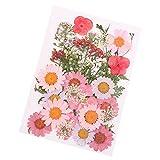 Cutogin, Flores prensadas mezcladas orgánicas Naturales secas Flores Bricolaje Arte Floral Decoración Colección Regalo, A