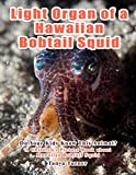 Light Organ of a Hawaiian Bobtail Squid: Do Your Kids Know This Animal?: A Children's Picture Book about Hawaiian Bobtail Squid  (Amazing Creature Series 4)