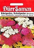 Schafgarbe, Edelgarbe, Achillea millefolium, ca. 150 Samen