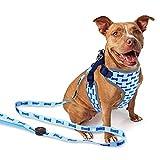 Yonfan LED Hundegeschirr Hundeleine Leuchtend mit Geschirr Verstellbar LED Brustgeschirr für Kleine und Mittlere Hunde, Welpen Blau