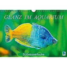 Glanz im Aquarium: Süßwasserfische (Wandkalender 2017 DIN A4 quer): Aquarium: Prachtregenbogenfisch, Marmorskalar & Co. (Monatskalender, 14 Seiten) (CALVENDO Tiere)