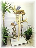 Kletterbaum für Vögel, Freisitz für Papageien, Papageienspielzeug, ORIGINAL Java Holz,165 cm