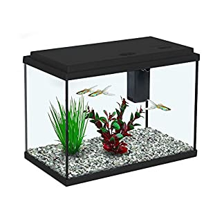 Aquariums and Fish Bowls