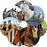 Graphic Flavour Horses Equestrian Reward Sticker Labels, Children, Parents, Teachers