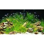TM Aquatix Aquarium Sand Natural Fish Tank Gravel Plant Substrate (20kg, Light 2-3mm) 7
